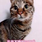 画了一晚上的图,伸个懒腰发现四只猫居然都没睡……这是在陪我嘛?😆😆#全新滤镜##宠物##猫咪#