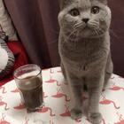 max有口福了,每天都有咖啡☕️饮#宠物##猫屎咖啡#
