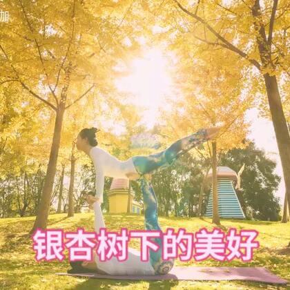 在那排银杏树下,我们埋下了希望 一点一滴的幸福是我们成长的阳光。#瑜伽##银杏叶黄了#@单色瑜伽老师度汐