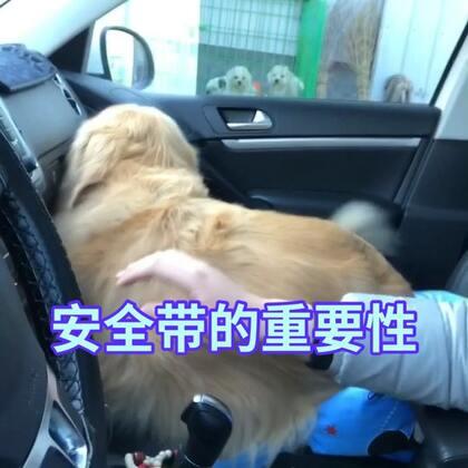 我不是故意的,我对不起你迪奥#宠物##搞笑#