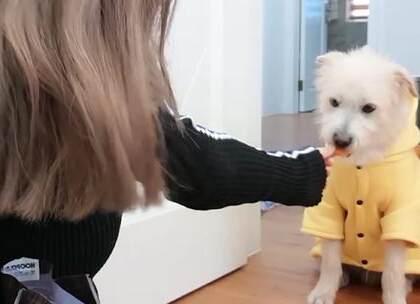 我给我的狗狗买了什么新年礼物!【第一集】🐶狗狗出镜啦~第一次拍这样的生活类视频,炒鸡好玩哈哈,希望你们喜欢我的狗儿子,也希望这支视频能给你们带来好心情哟~视频有点长,先传第一部分😘#宠物##狗狗#