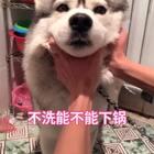 狗狗不洗能不能下锅?!在线等#宠物##解锁冬奥冷姿势##精选#