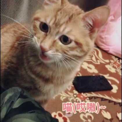 #猫咪##喵星人#可以现在很听话了 一叫就答应 哈哈😄哈哈#宠物#