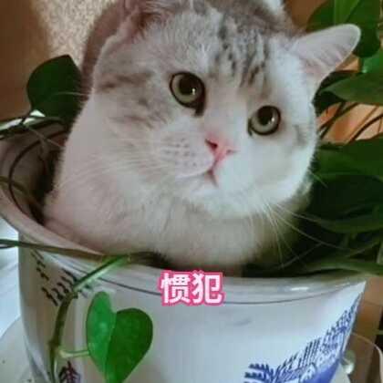 屡教不改的惯犯😂 #宠物##日志##精选#@宠物频道官方账号 @美拍小助手
