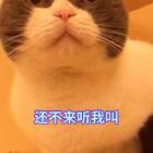 😍😍终!终!!终!!!终于!!!让我录到妹子的叫声了😂😂快给我发小红花🌺最后的弟弟的叫声😊我们的猫都不是喵喵叫😅#宠物##俩喵欢乐多##解锁冬奥冷姿势#