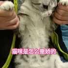 猫咪撒娇的正确方式#宠物#