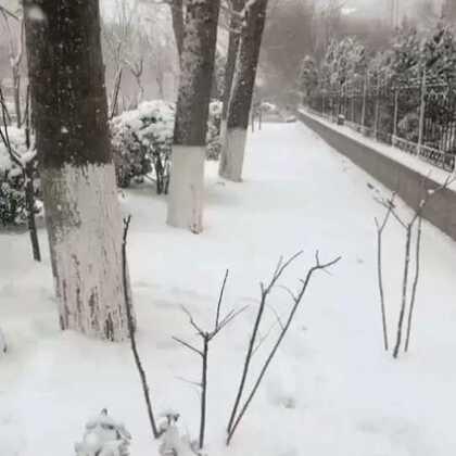大威海下雪了呦,你们想要的浪漫在这里!