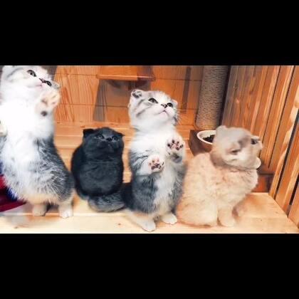 #宠物##萌宠##猫咪# 日常吸猫,想全部抓走!