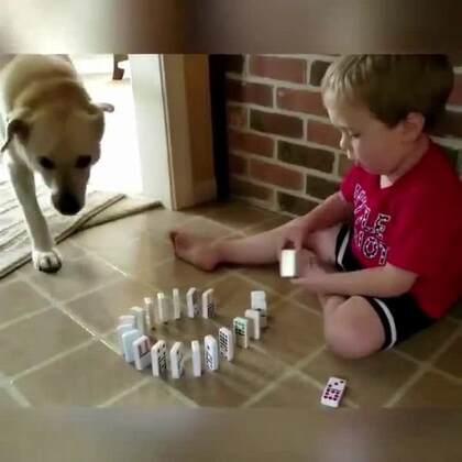 #宠物# 哈哈哈哈哈哈哈感受下来自狗子们的恶意。汪:我一向很小心,如果你觉得我是故意哒,那我就是故意哒😏