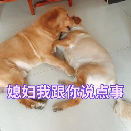 秀恩爱#撒狗粮##宠物#