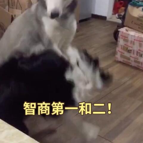 【海桐桐桐桐桐美拍】#宠物#本来vk最怕八福……后来…...
