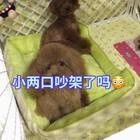 #汪星人##宠物#小两口闹别扭了吧😂😂都不理对方了😳!http://item.taobao.com/item.htm?id=527678076669 莎拉麻麻手工宠物零食!纯天然更健康!