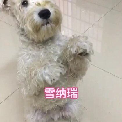 #精选##宠物#喜欢狗狗的点下赞吧。