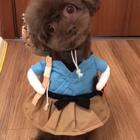 #宠物#萌萌哒小渔夫背着小草帽插着小腰来卖个萌😂#我的宠物小精灵#