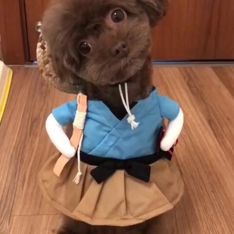 【麻麻的逗宝美拍】#宠物#萌萌哒小渔夫背着小草帽插...