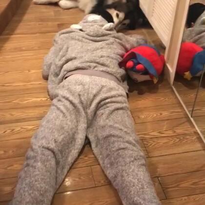 #宠物# 地板上的爷俩儿