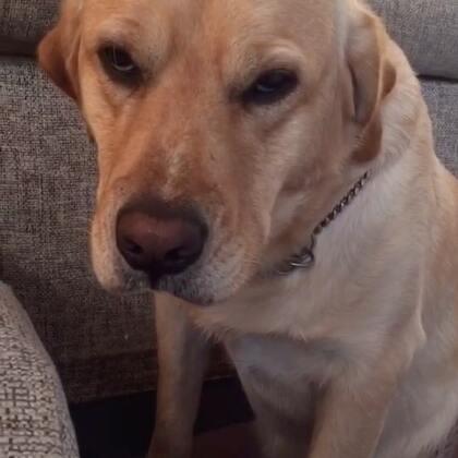 #宠物#送妈妈同学去考试,回来看到这表情我就懂了😌