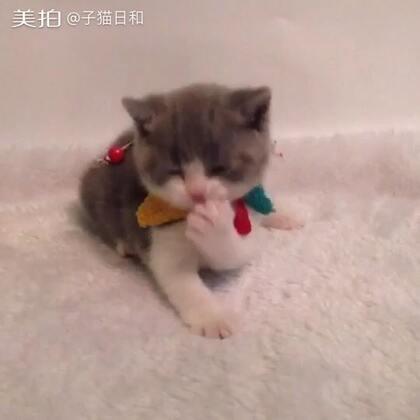 【子猫日和美拍】01-13 20:22