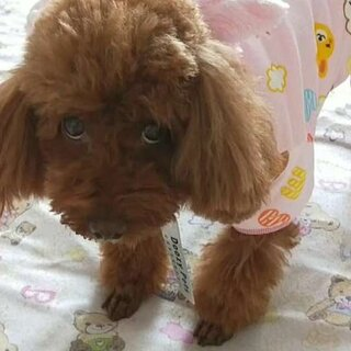 #宠物#宝宝的新衣服,姨姨姐姐们好看吗?#我的小可爱#我的宝贝萌萌哒!美美哒,宝贝昨天打育苗了一周都不能出去玩了,#宝宝不开心#在家和妈咪玩也是一样高兴滴心情美美哒!