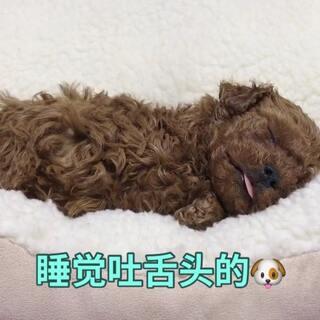 #宠物#睡觉这么可爱,萌翻了😘