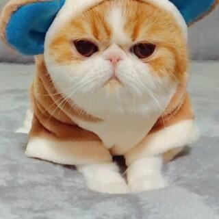 眼睛带电😋#宠物##我要上热门@美拍小助手##我的宠物萌萌哒#