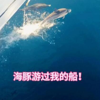 """这对海豚恋人一直跟着我们的船游,好浪漫!祝大家2018都找到自己的""""海豚湾恋人""""哦❤️❤️ 单身的朋友来留个言吧!#美拍15秒mv大赛##精选##我的有毒小视频#@美拍小助手"""