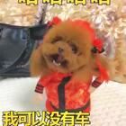 #宠物##搞笑##汪星人#😂😂😂