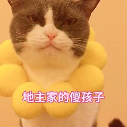 别问我为什么!我妈说脖子挂大饼 饿了低头就有吃🙂我妈怕不是个智障吧🙂🙂#宠物##精选##宠物界吃货#