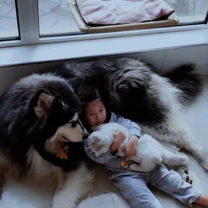 我咩真的是集万千宠爱于一身😂羡慕,我也想躺塞塞身上,哈哈哈哈可是这瘪犊子不让我躺#精选##宠物##萌娃和萌宠#
