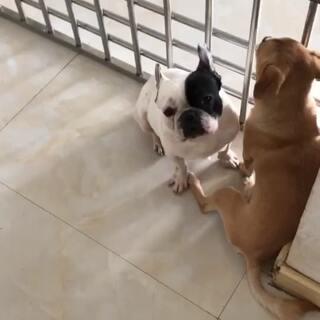 #宠物#。臭逗逗、就说你呢…… 妈蛋,根本不搭理我