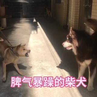 #宠物##精选#