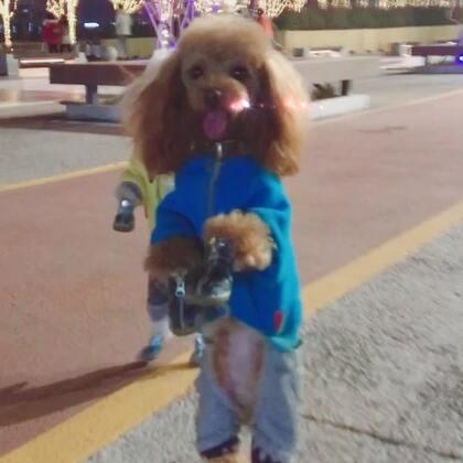 #精选##宠物##娃娃脸手势舞#安妮美美去北京玩啦有木有偶遇的小可爱😘😘😘