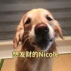 #只想发财#Nicole课堂:爱情终究虚无缥缈,不如发财来的实际#宠物##精选#@美拍小助手 @宠物频道官方账号