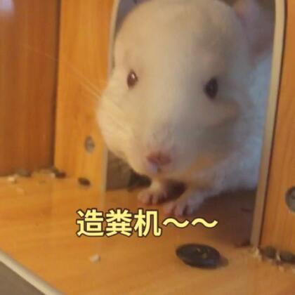 造粪机~~糯米君😄#宠物#