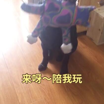 乌娜:我更萌~~陪我玩~~#宠物#