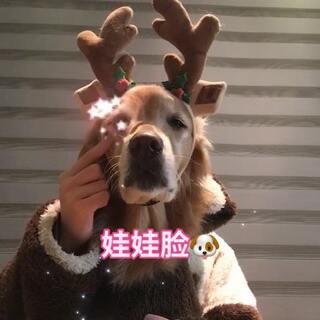 尼扣是家里的娃娃脸😄😄@宠物频道官方账号 @美拍小助手 #娃娃脸手势舞##精选##宠物#