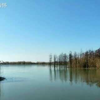 #逛拍##家乡美景-冬日的滆湖湿地公园风光随拍##手机摄影#(1)