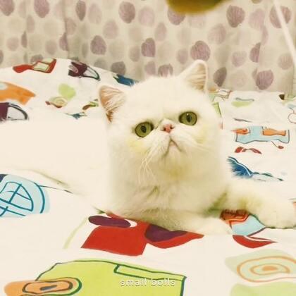 #加菲猫##加菲猫的幸福生活#白白