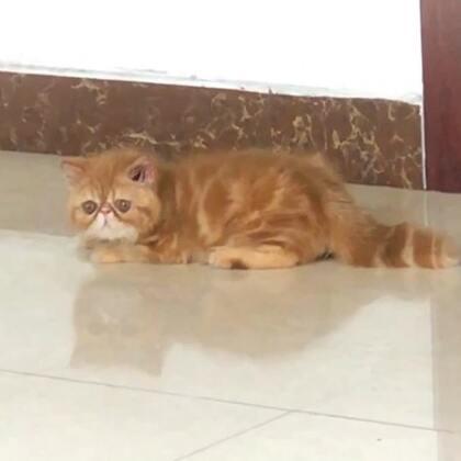 #加菲猫##加菲猫的幸福生活#嘿咻