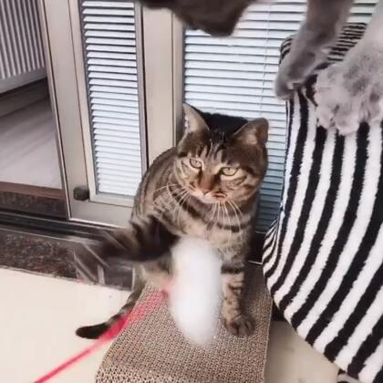 闲暇的午后时光Emmm~四只猫居然都围过来了!😆#宠物##喵星人##猫咪#