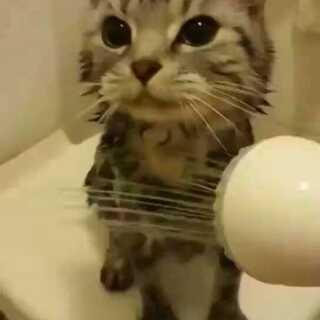 #宠物##我要上热门@美拍小助手#一只爱洗澡的猫,太可爱了😚#大爱猫咪控#