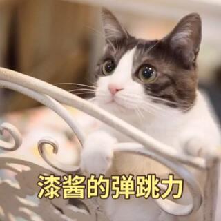 #漆美尼与昔麻的小日常#之漆酱的弹跳力。可爱的小漆漆真是弹跳力十足,轻轻松松可以跳的很高,征服一只小小的逗猫棒并不在话下,漆:so easy~ 美爷:我也可以!#宠物#