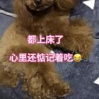 #宠物##汪星人#都上床准备睡觉了,心里还惦记着吃,这闻闻👃🏻,那找找😂😂http://item.taobao.com/item.htm?id=560104715895 莎拉麻麻手工宠物零食!