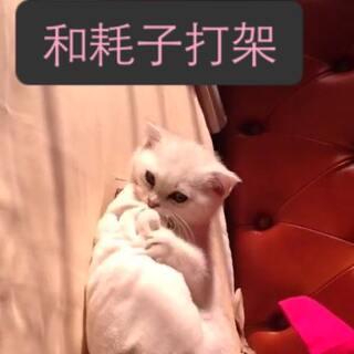 #宠物#@徐太浪...,,♛ @😉✂👻💨 @May梦~\(≧▽≦)/~ @噗萄🍃 @Summer🎁✂😉 @💞VAVA迷💞👑 @🐠鲸聆🐳 小样😁