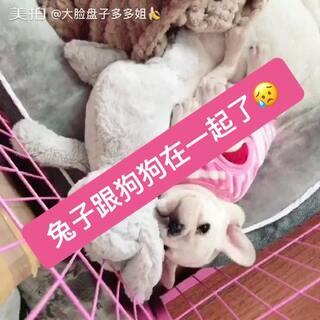 #宠物##精选##美拍小助手#相亲相爱,我只要10个❤️