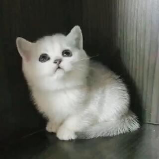 #宠物##喵星人##第一个美拍#刚开始养猫,不知道起什么名字,求各位大佬赐名!