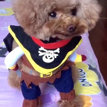#宠物#这个小海盗是个吃货😄😄#宠物界吃货#