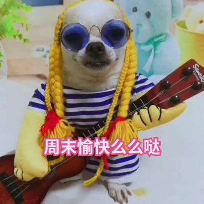 #宠物#周末愉快叔叔阿姨,姐姐们!哈哈哈俺假扮吉他手🎸为大家献一曲😄#吉娃娃##我的宠物萌萌哒#💕💕