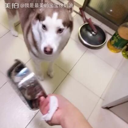 #宠物##哈士奇#😂洗狗盆的日常