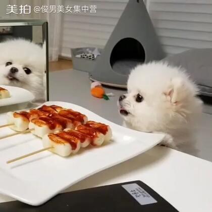 再不给我一点我可要生气了!Give me some too!😠😤😫😡❤️@小冰 #宠物界吃货##宠物#***最有趣的汪星人话题👉#汪星人逆袭#